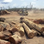 UN denounces deforestation to open the International Year of Forests