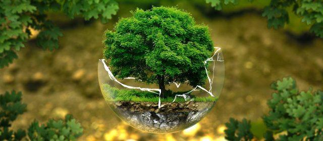 Jak chronić środowisko? dla dzieci i dorosłych