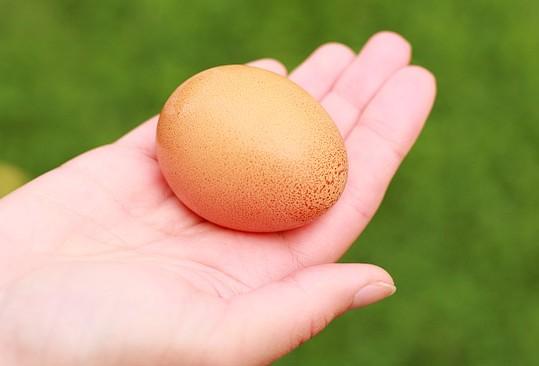 Zrobieni w jajo